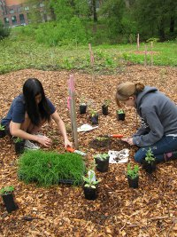 Sophia-and-Katie-planting-milk-vetch-comfrey-and-chives.200